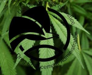 marijuana pot leaf